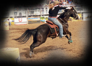 Rodeo Horse3