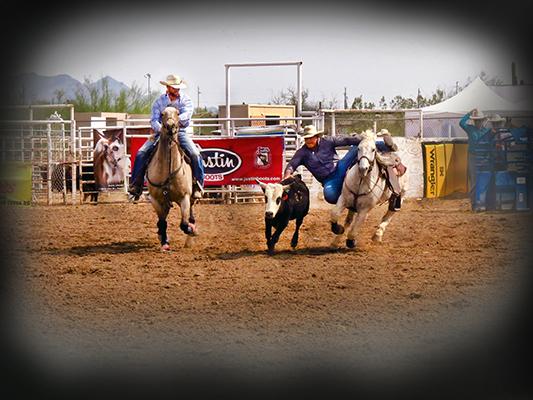 Rodeo Steer2